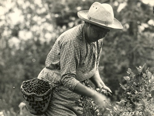 woman picking huckleberries
