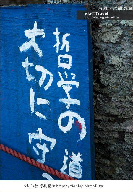 【via關西賞櫻行】京都賞櫻景點~哲學之道22