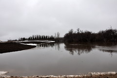 Zenkers and their back yard (pictureapromise) Tags: county bridge snow tree ice water river flooding flood nd abercrombie roadclosed redriver fargo colfax 2010 richland march15 redriverofthenorth galchutt reflectionredriverflood2010 wildriceriverflood2010 redrivervalley2010