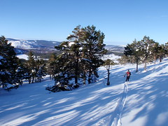 Explore the Scots Pine Forest on xc skis