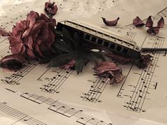 Harmonica (Mahmood H. Almahmoodi) Tags: life music still sony harmonica mahmood   mahmoodi      w310  almahmoodi