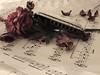 Harmonica (Mahmood H. Almahmoodi) Tags: life music still sony harmonica mahmood محمود طبيعة mahmoodi موسيقى رومانسية آلة سوني صامته w310 موسيقية almahmoodi المحمودي هرمونيكا