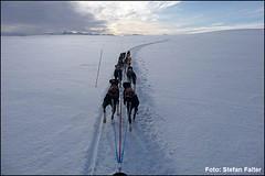 Stefan-Falter: Amundsen Race