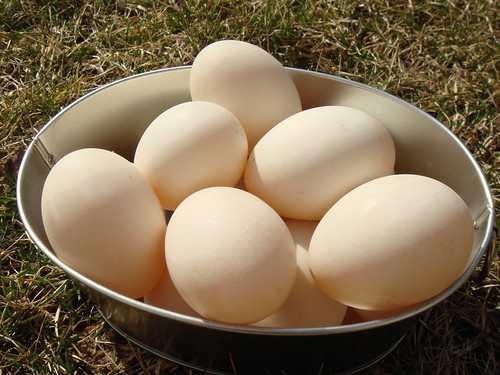 First Taste Of Duck Eggs: Beautiful Colour