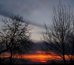 I giardini di marzo si vestono di nuovi colori (White Red Flower) Tags: sunset sky gardens clouds march tramonto nuvole colours dusk cielo colori marzo giardini inmygarden nelmiogiardino