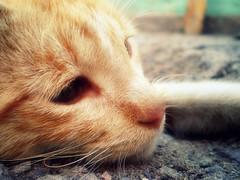 | ¡Hamburger Time! | (Weichen Gesang Des Windes) Tags: pet cat sadness tristeza bebé gato goodbye mascota haku camilacastro hamburgertime weichengesangdeswindes©