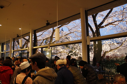 Viewing the cherry blossoms from Toho Studio cafetaria