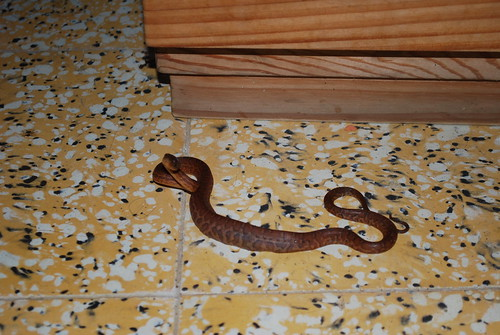 The snake in our room!