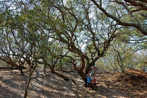 camping: live oak trees