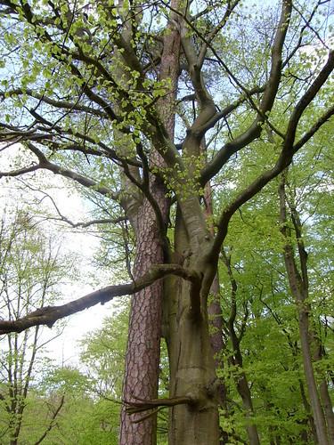 Bäume umarmen sich