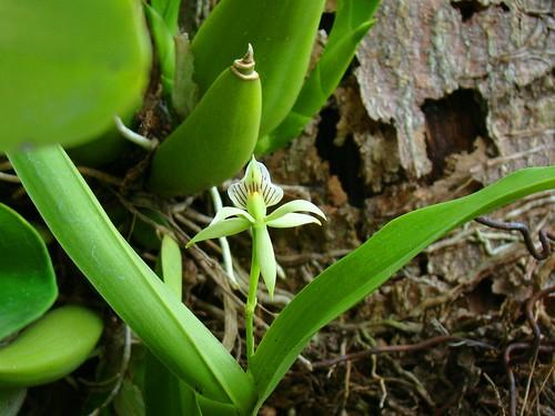 Orquídeas (1)
