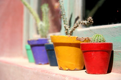 Cinco Colores (Leo Levalce) Tags: blue red cactus verde green window colors yellow azul ventana rojo purple colores amarillo flowerpot violeta maceta flickrestrellas