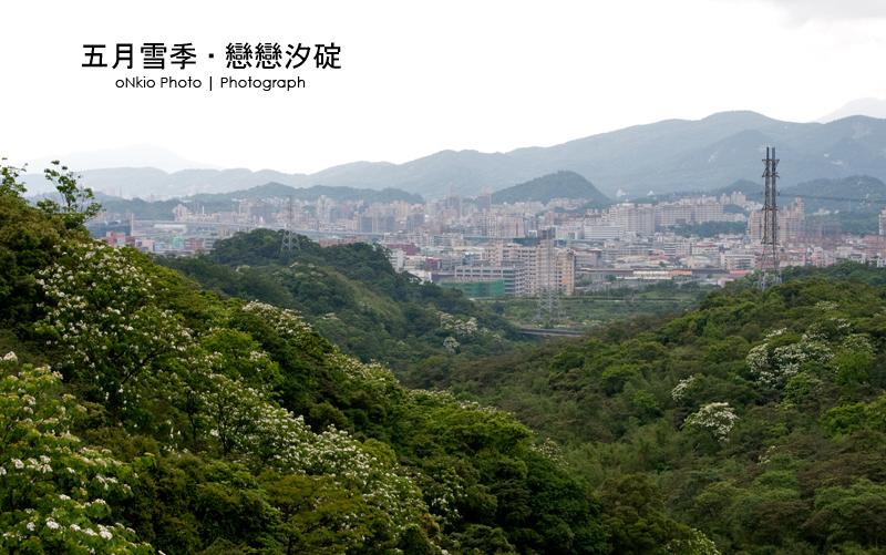 2010 桐花季.台北汐止汐碇路