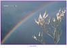 La naturaleza es... color (Jabi Artaraz) Tags: españa color primavera arcoiris spain sony zb bizkaia euskadi vizcaya udaberria kolorea beautifulearth ortzadarra ostadarra euskoflickr fineartphotos abigfave superaplus aplusphoto flickrbest impressedbeauy diamondclassphotographer flickrdiamond excapture jartaraz thebestofday gününeniyisi bderechosdeautorauthorscopyrightb©jabiartaraz bestofblinkwinners blinksuperstars