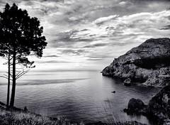Mi Horizonte (Leonorgb) Tags: bw canon mar leo bn cielo pinos roca cantabria horizonte liendo