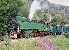 Bulgaria State Railways (BDZ) 2-10-2T steam locomotive 609 76, built by Chrzanow in Poland in 1949, rolls by the flowers, in the canyon of the River Cepina, between Varvara and Draginovo, Bulgaria, August 26, 2006. (Ivan S. Abrams) Tags: ivansabrams abramsandmcdanielinternationallawandeconomicdiplomacy ivansabramsarizonaattorney ivansabramsbauniversityofpittsburghjduniversityofpittsburghllmuniversityofarizonainternationallawyer