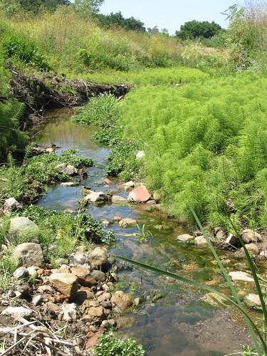 San Marcos stream