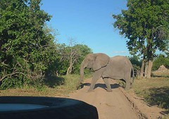 Elephant Crossing, Chobe National Park Botswana