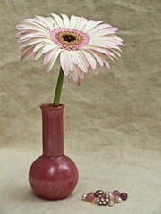 Gerbera (Of Spring and Summer) Tags: pink flowers stilllife white inspiration flower art texture home nature glass floral vintage garden photography design beads linen antique buttons interior creative pearls gerbera stems vase romantic antiques marbles vases shabbychic poolepottery ofspringandsummer prettystems