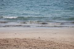 IMG_2967 (Marc Aurel) Tags: ocean sea beach strand hotel meer burma indianocean resort myanmar birma spiaggia bayofbengal rakhine ngapali thandwe arakan indischerozean indik birmania rakhinestate sandoway rakhaing golfvonbengalen 5dmarkii golfodelbengala eos5dmarkii sandowayresort rakhaingstaat myapinvillage myapindorf ngapalibay ngapalibucht