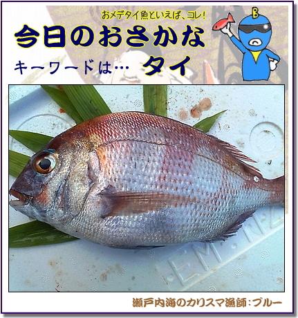 今日のおさかな 「鯛」