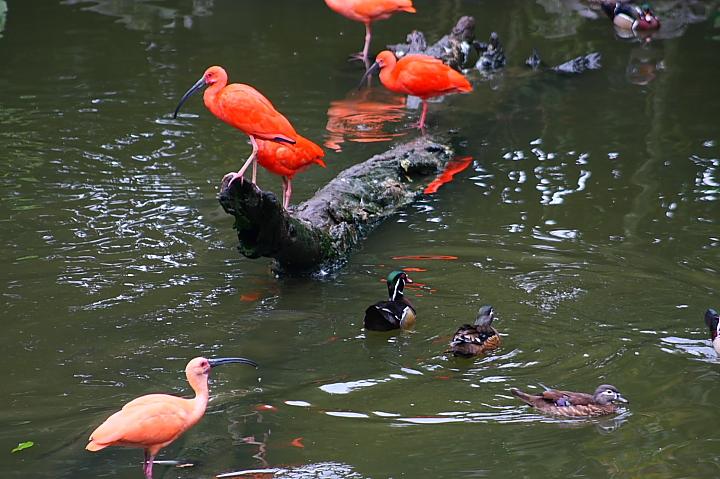 台北木柵動物園0013