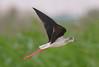 رهيز (PhotoGrapherQ80 «KWS») Tags: birds kuwait adel abdeen