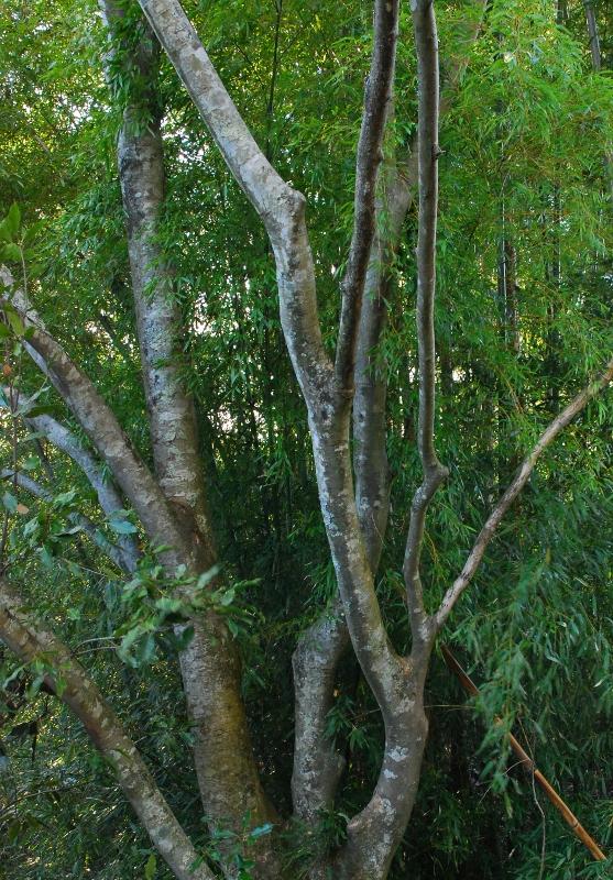 bambooandtree