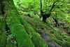 Pagadia Enirio inguruan (jonlp) Tags: nature forest landscape natura euskalherria basquecountry gipuzkoa basoa aralar paisajea