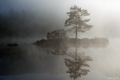 Foggy morning (Arnfinn Lie, Norway) Tags: wonderland tqm greatphotographers bealive naturepoetry platinumphoto betop updatecollection ucreleased beseven flickraward5 mygearandmepremium mygearandmebronze mygearandmesilver mygearandmegold mygearandmeplatinum flickrawardgallery greaterphotographers fogtkewaterislandmorninglandscape aboveandbeyondlevel1 aboveandbeyondlevel2