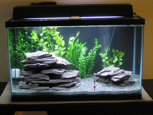 Viewtopic also This is the whole house 4 fish total with three reflecting in the glass in addition 34581 45 Gallon Cichlid Tank 10 Gallon  munity 1 Gallon Guppy besides My 29 Gallon Planted Freshwater Tank further 125 Gallon Planted Aquarium. on oscar cichlid in 10 gal tank