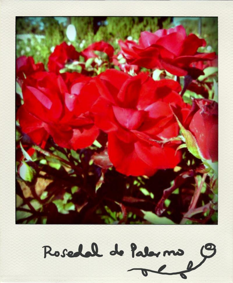 06_BsAs bye bye: Rosedal de Palermo