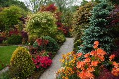 Path to the middle garden (May 18) (Four Seasons Garden) Tags: flowers colour english beautiful marie gardens garden four spring all seasons picture tony foliage national scheme newton tapestry walsall ngs fourseasonsgarden