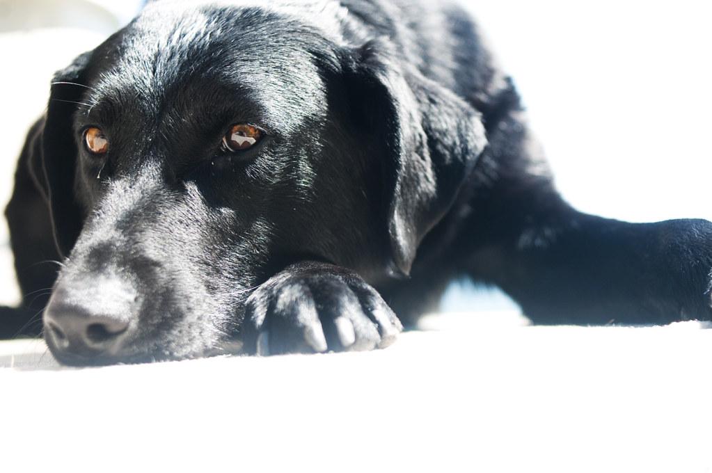 dogday05