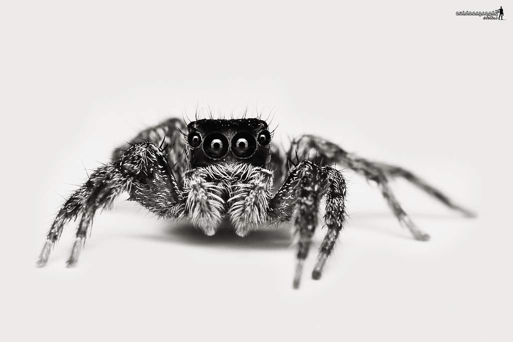 Jumper Portraiture | B&W (by Sir Mart Outdoorgraphy™)