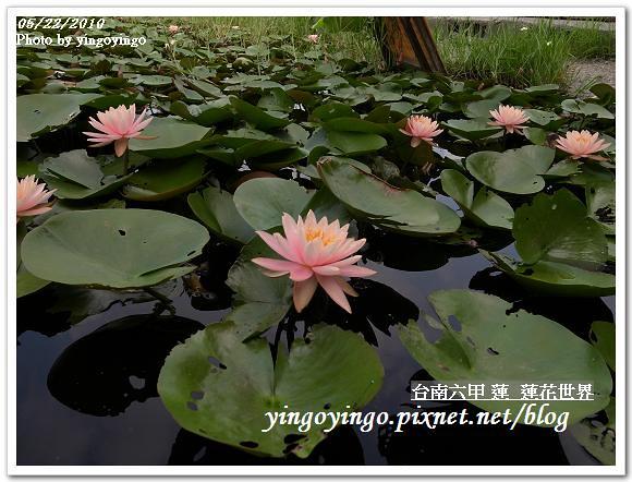 蓮花世界R0012559