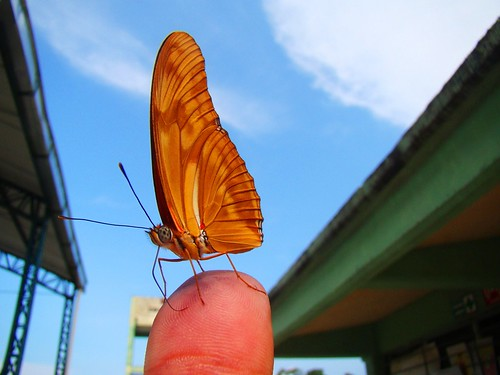 Mariposa en mi mano (4)