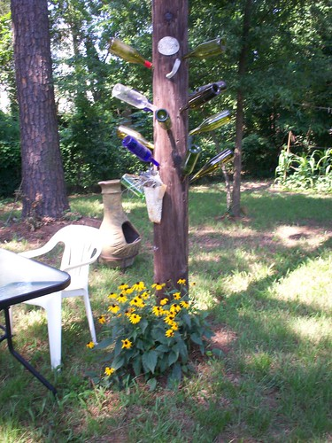 black eyed susans under the bottle tree