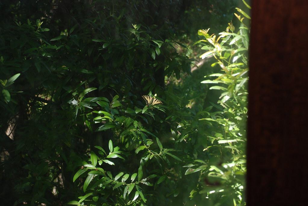 butterflies outside the cabin