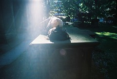 tomb napping (Adele M. Reed) Tags: sun film graveyard 35mm nap glare tomb super 200 lucky coventry canoneos loz redemption