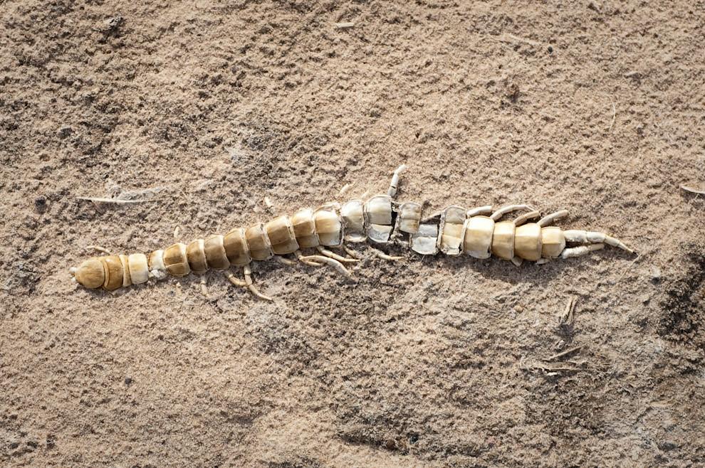Un esqueleto de cien pies encontrado en la zona donde fué alguna vez una laguna salada en Isla Po'í (Elton Núñez - Isla Po'í, Paraguay)