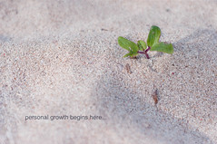 Personal growth begins here (Fajar Nurdiansyah) Tags: bali plant leaves indonesia sand text negativespace simple whitesand textured 50mmf18