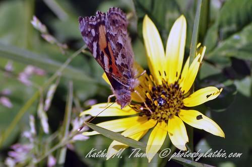 Season's first butterfly