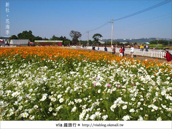 【2010新社花海】via帶大家欣賞全台最美的花海!7