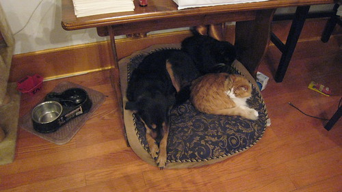 Three pets, one bed