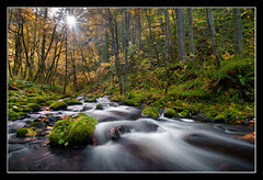 Shine A Light (Michael Bollino) Tags: autumn sun fall nature water oregon creek river outside flow star moss nikon rocks northwest hiking columbia gorge sunstar
