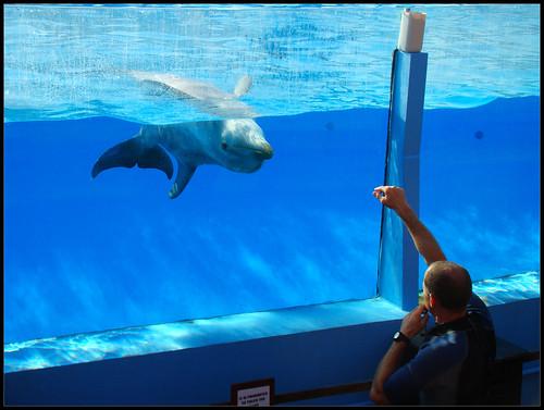Espectáculo Delfines (3)
