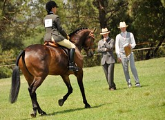 Judging (Lauren Barkume) Tags: show africa november horses horse woman grass hat southafrica bay competition riding connemara breed johannesburg joburg judges laurenbarkume eatonfarm summershowingfestival