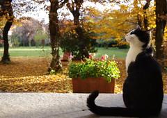 Take it easy... (FattoreWow) Tags: alberi cat kitten feline pentax natura erba felino albero gatto gattino kx pentaxkx