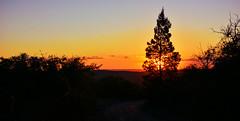 EL ARBOL AL ATARDECER (Marina Balasini & Juan Montiel) Tags: tree arbol sunset sun atardecer travel turismo viajes silueta argentina